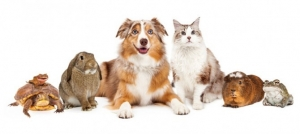 Alpha Cares: August is Animal Health Month